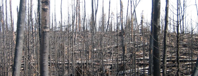 The aftermath of the Ham Lake forest fire in the Boundary Waters Canoe Area.